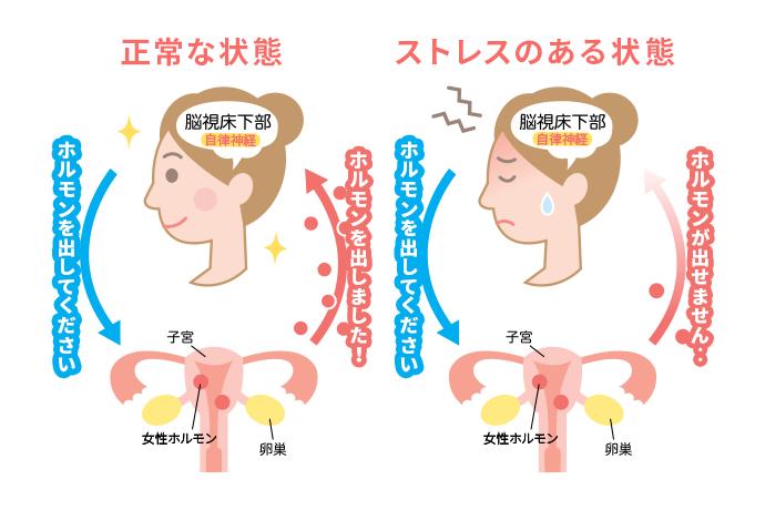 女性ホルモンの仕組みの図